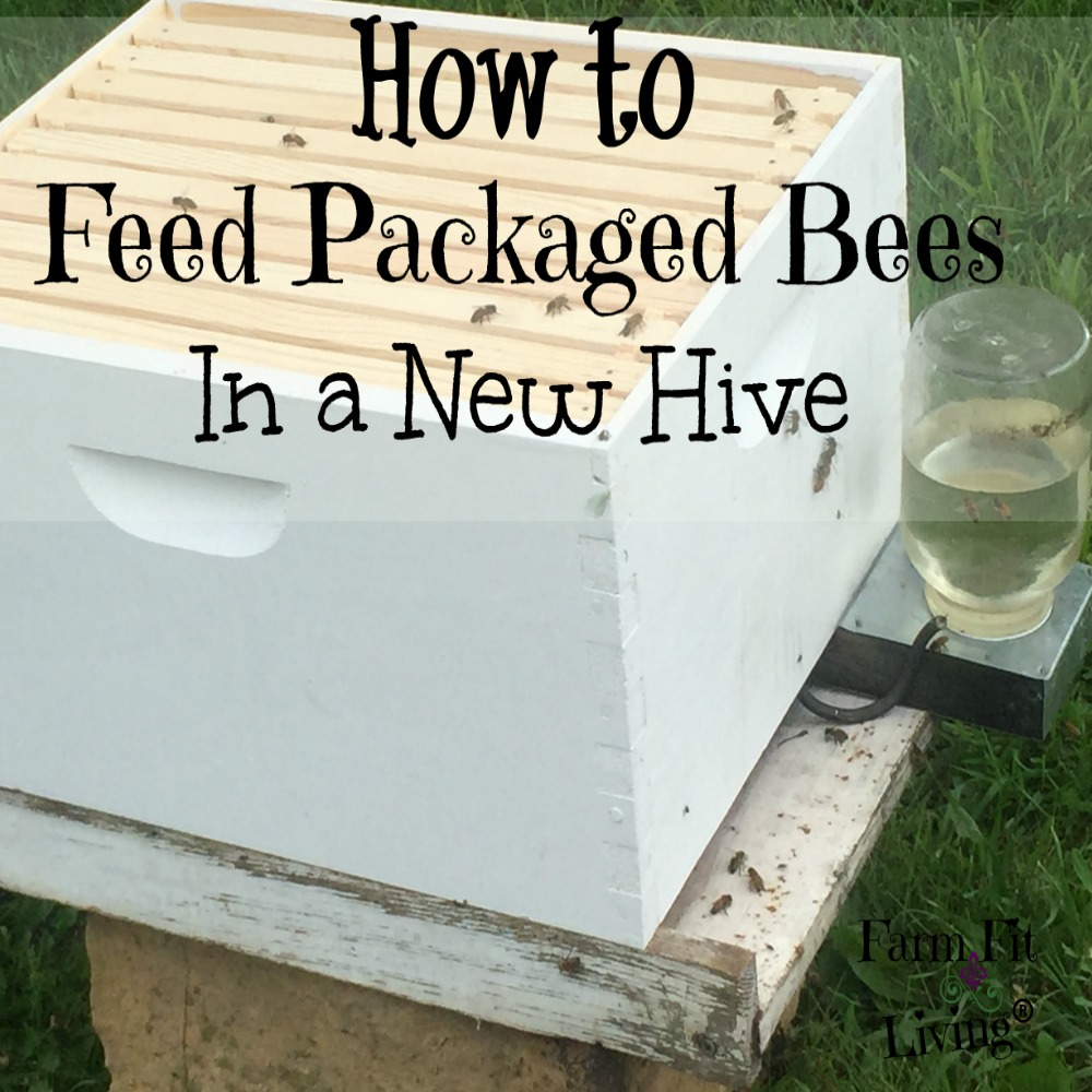 feeding packaged bees