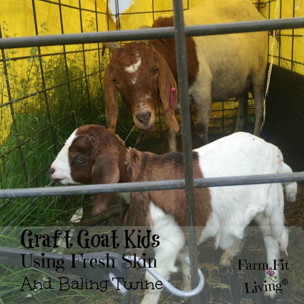 Graft Goat Kids