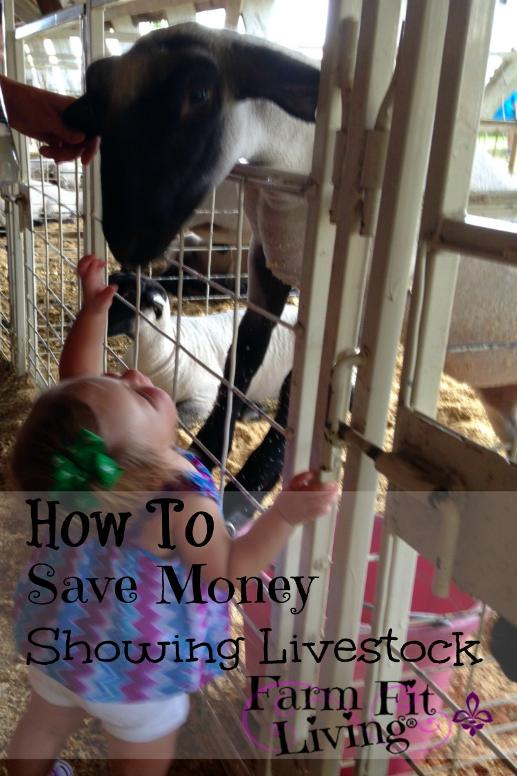 how to save money showing livestock