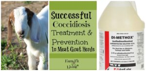 Successful Coccidiosis Treatment