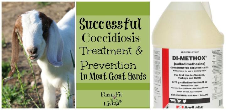 Successful Coccidiosis Treatment
