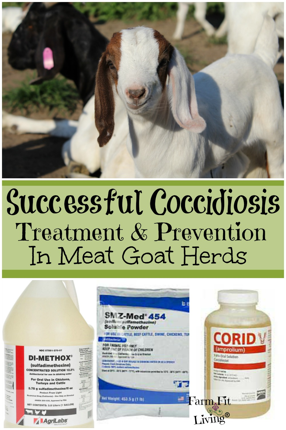 Successful Coccidiosis Treatment and Prevention in Meat Goat
