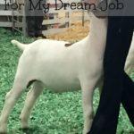 ways showing livestock prepared me for my dream job