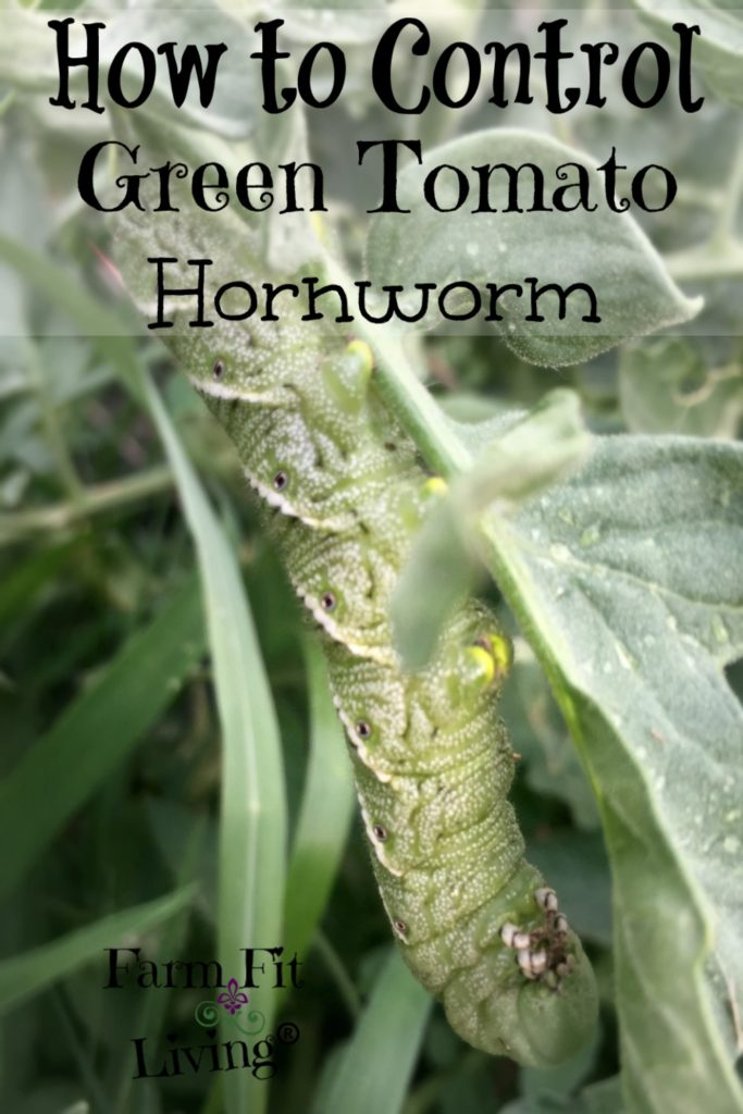 Control Green Tomato Hornworms