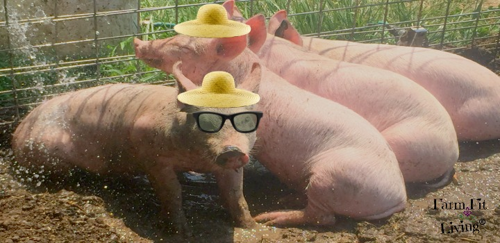 Keep pigs cool