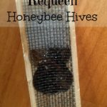 Requeen Queenless Honeybee Hives