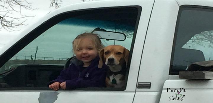 travel alongside pets