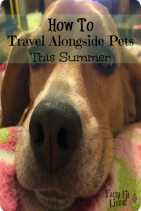travel alongside pets