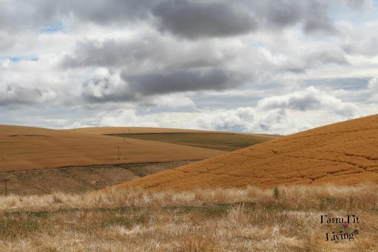 July 2016 Rural Photo Shoot