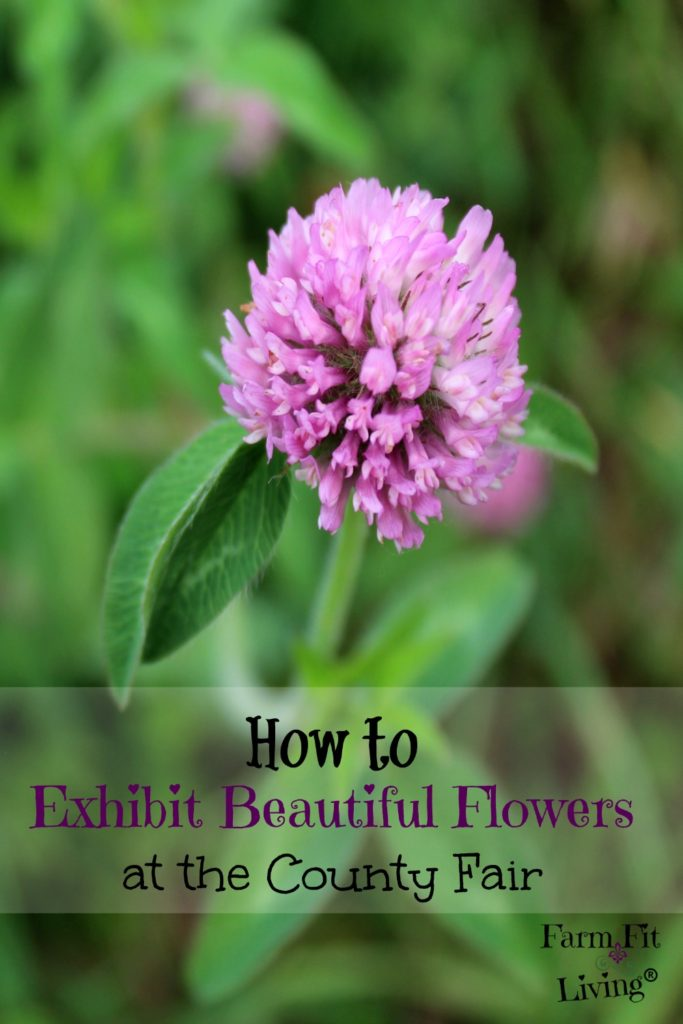 County Fair Flower Exhibitor Guide