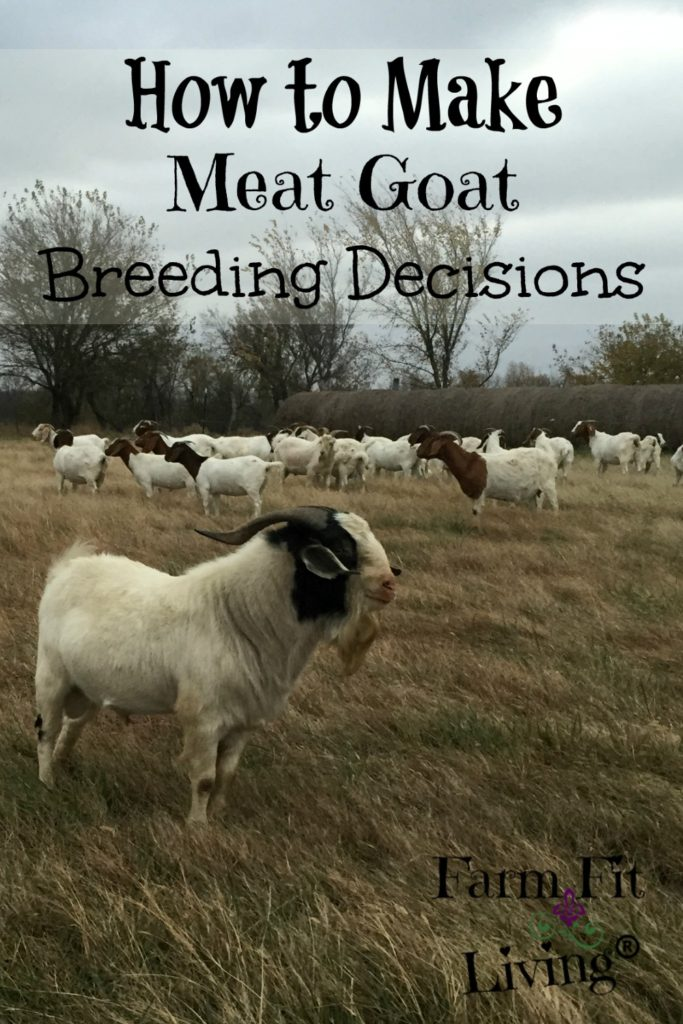 Meat Goat Breeding Decisions