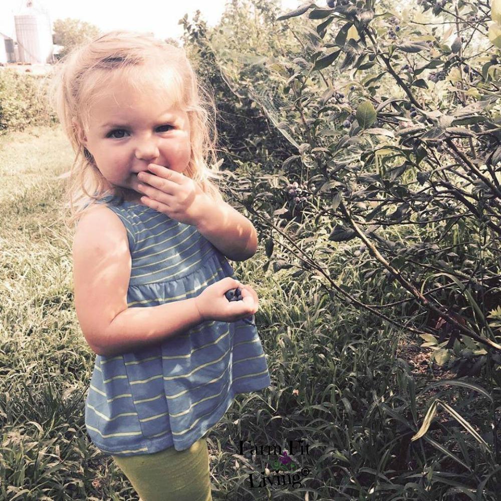 pick local summer blueberries