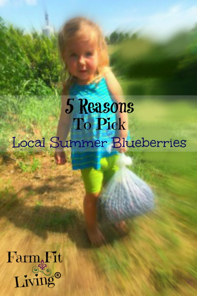 pick local summer blueberries