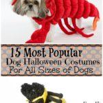 Most Popular Dog Halloween Costumes