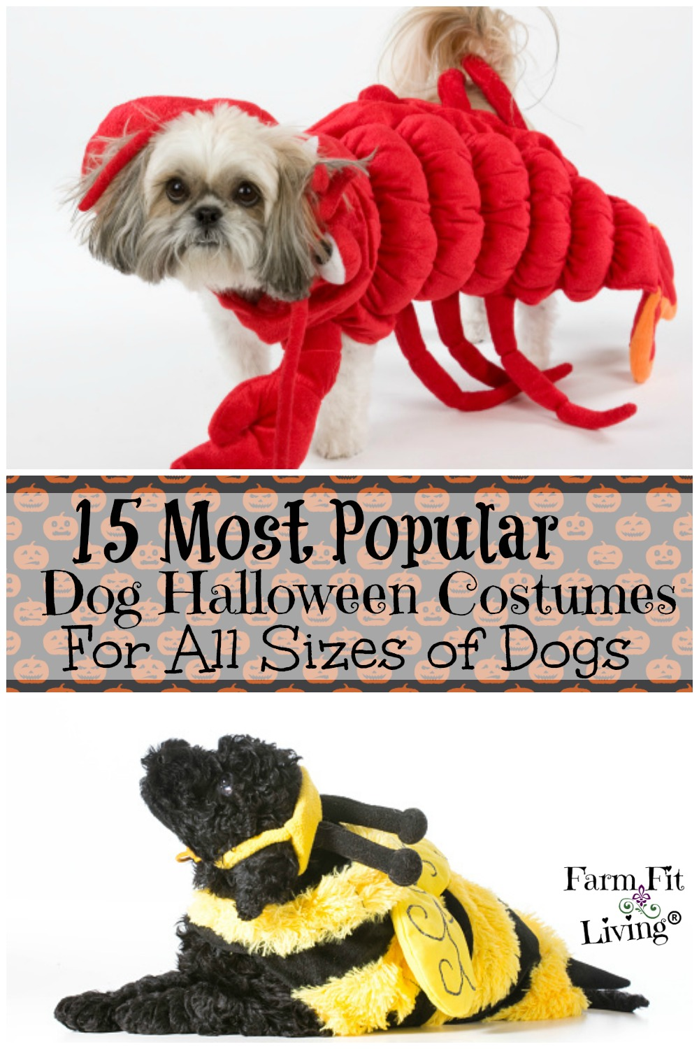 Most Popular Dog Halloween Costumes