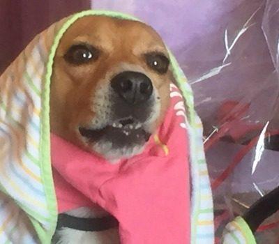popular dog Halloween Costumes