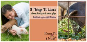 things to learn about backyard pigs