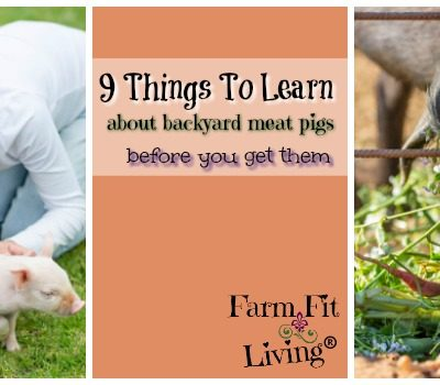 9 Things To Learn About Backyard Pigs Before You Get Them