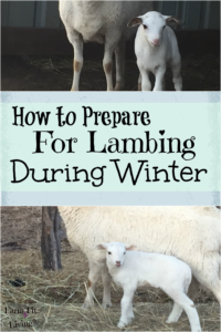 How to Prepare for Lambing