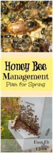 honey bee management plan