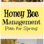 honey bee management plan