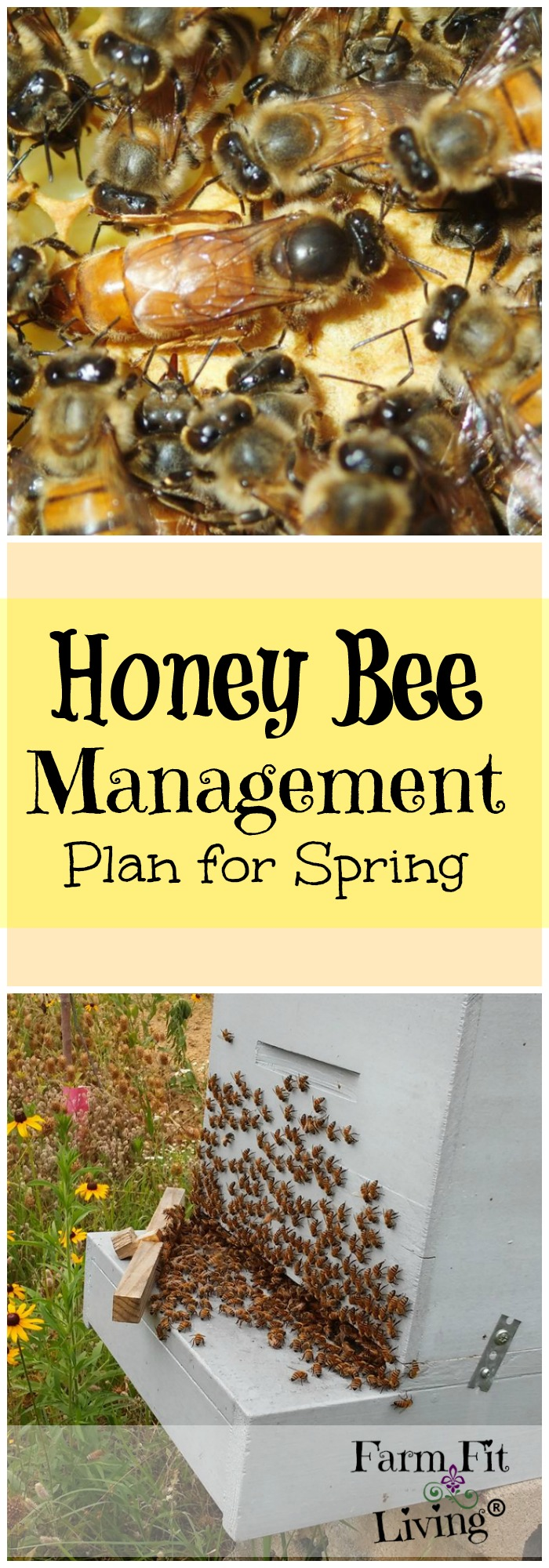 So, your bees made it through the winter. What's the next step? Here is a honey bee management plan for spring time beekeeping.