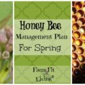 Honey Bee Management Plan for Spring