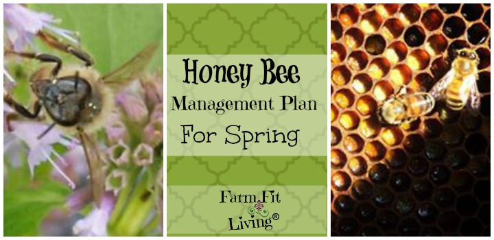 honey bee management