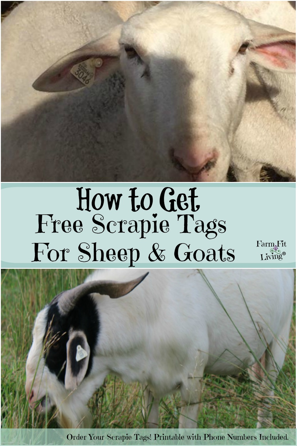 hot to get free scrapie tags for sheep and goats