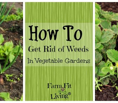 How to Get Rid of Weeds in Vegetable Gardens