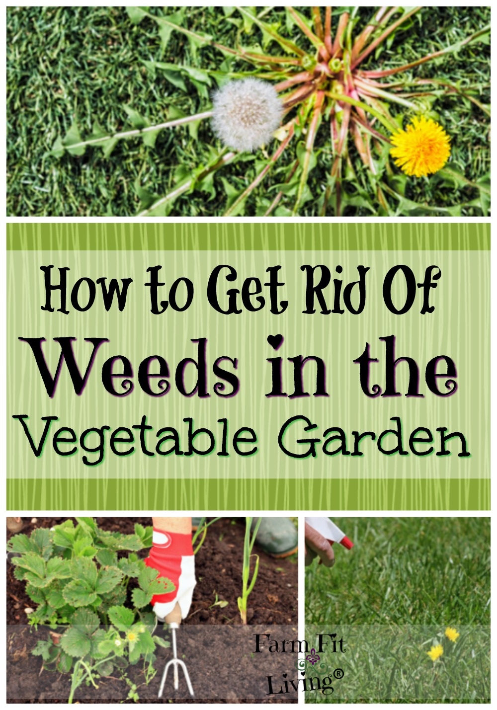 How to get rid of weeds in vegetable gardens Vegetable garden weed control