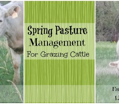 Spring Pasture Management Tips for Grazing Cattle