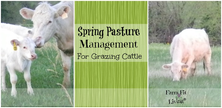 Spring Pasture Management for Grazing Cattle