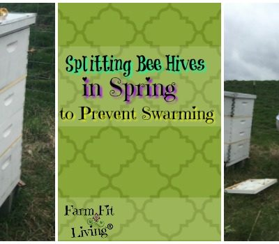 Splitting Bee Hives in Spring to Prevent Swarming