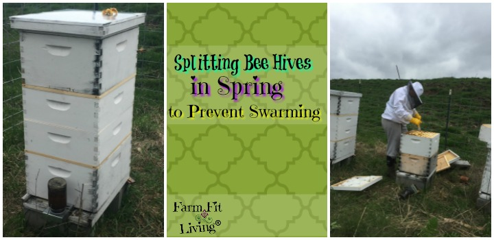 splitting bee hives in spring