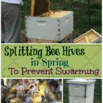 splitting bee hives in spring