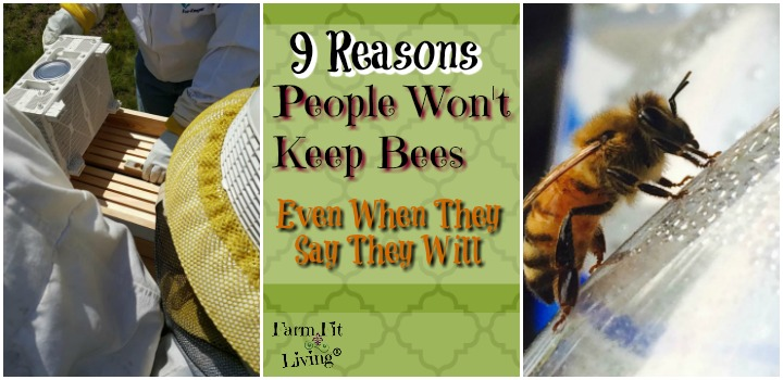 9 reasons people won't keep bees