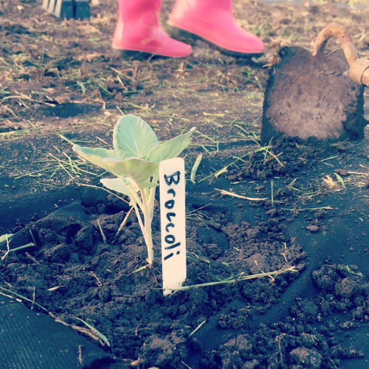 summer garden planting guide