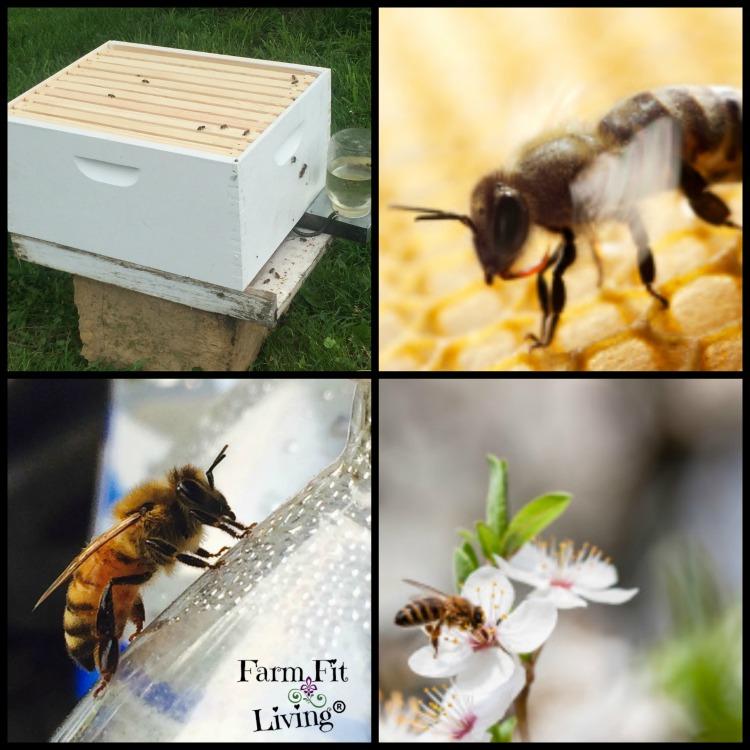 9 reasons people wont keep bees