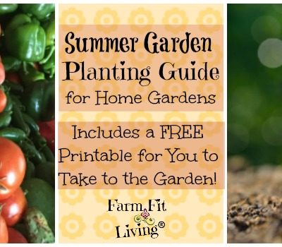 Summer Garden Planting Guide for Home Gardens