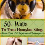 ways to treat honey bee stings