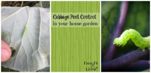 cabbage pest control
