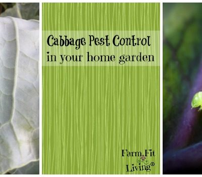 Cabbage Pest Control in the Home Garden