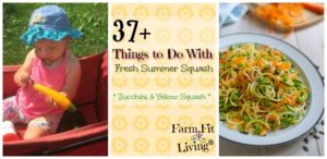 things to do with all that summer squash