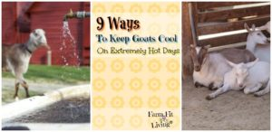 ways to keep goats cool