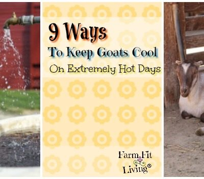 9 Ways to Keep Goats Cool on Extremely Hot Days