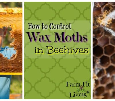 How to Control Wax Moths in Beehives