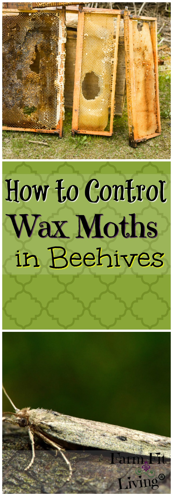 control wax moths in beehives