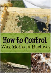 Control Wax Moths in Bee Hives