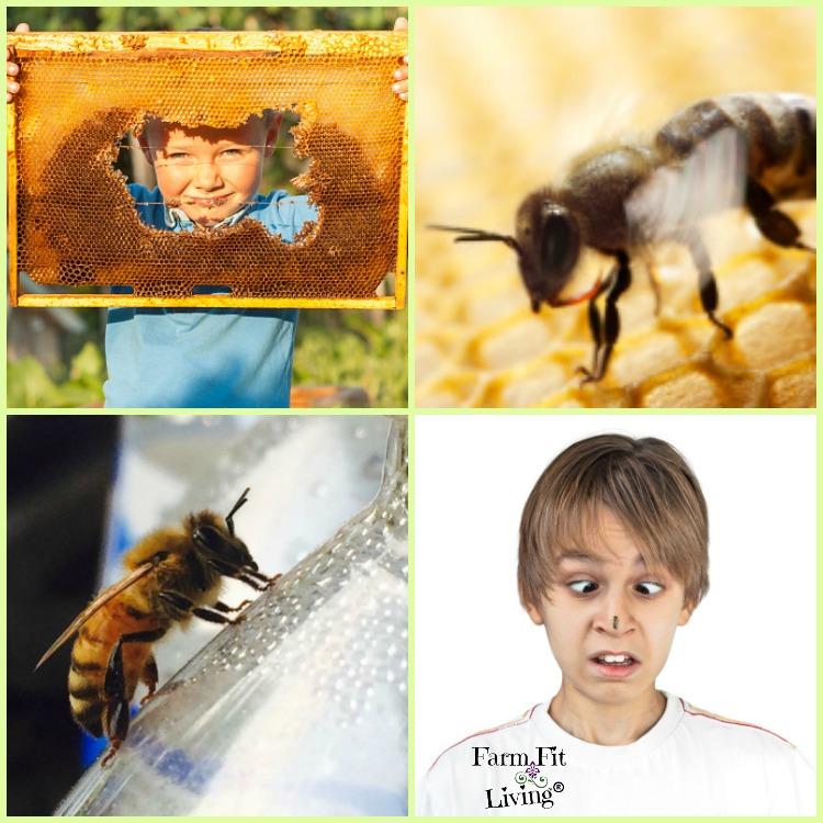 Beekeeping Mistakes
